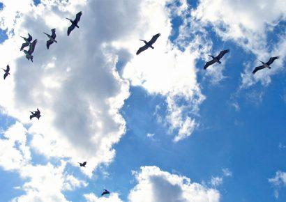 Использование дронов для разгона птиц над аэропортами