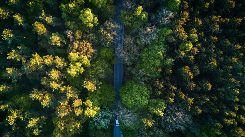 Беспилотные «стражи леса» прошли первые испытания